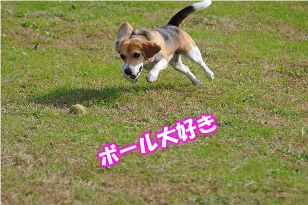 9_Rr009.jpg