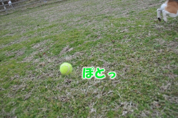 DSC_4939.jpg