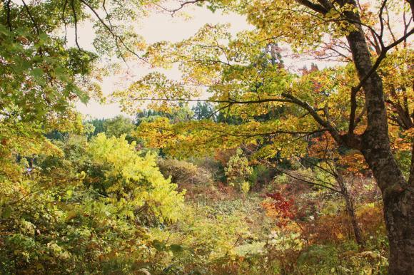 里の秋追記3