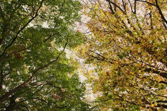 里の秋追記2
