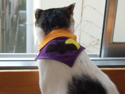 猫バンダナ ハロウィン