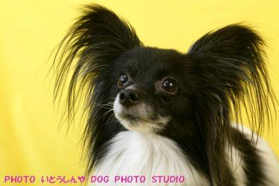 DOG PHOTO 3