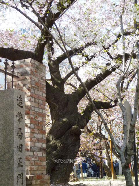 110415_造幣局_桜の通り抜け_旧正面_八重桜