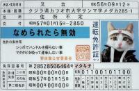 SA330190s.jpg