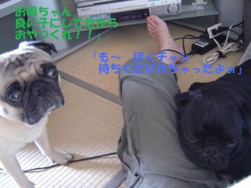090812_021_2.jpg