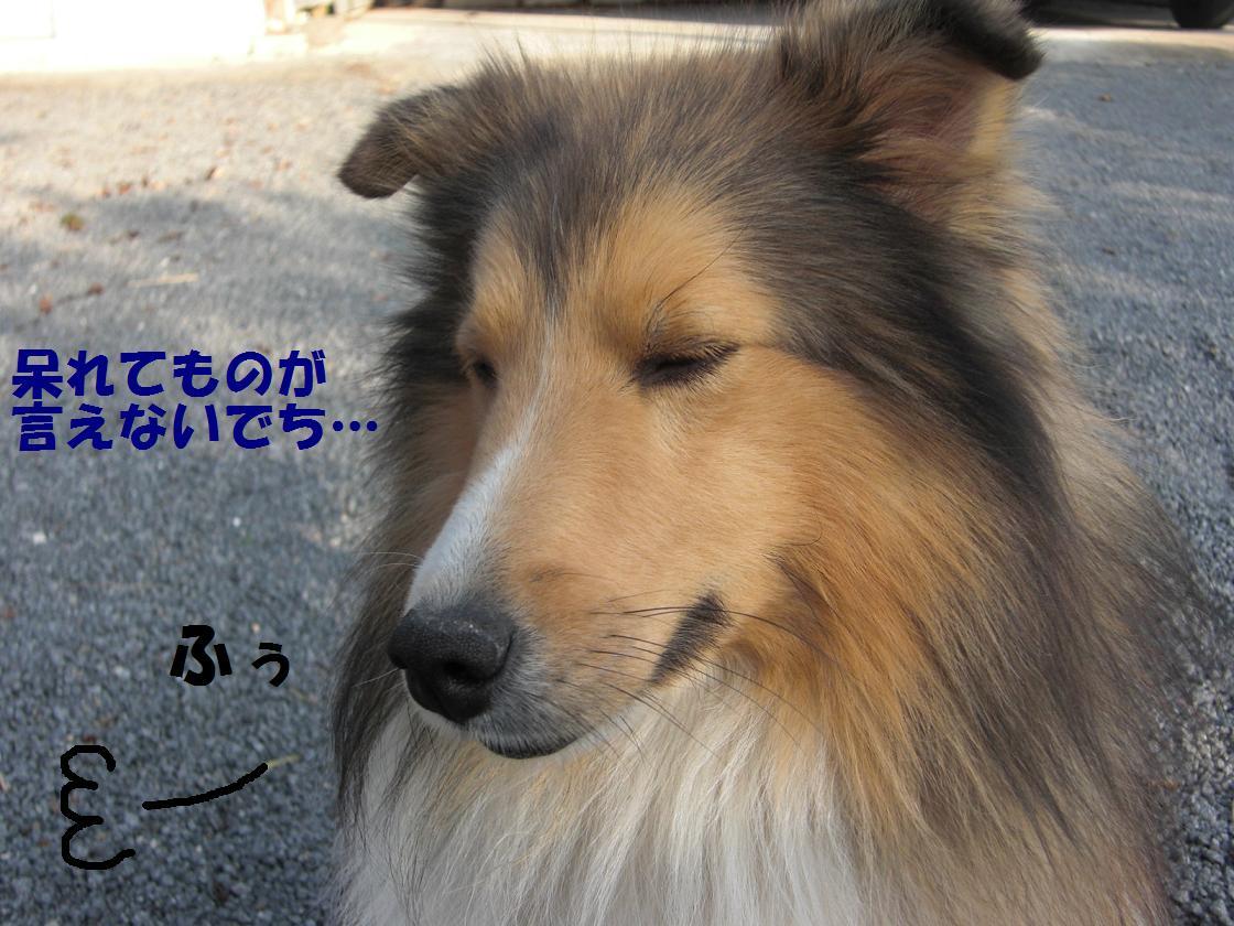 CIMG5910.jpg