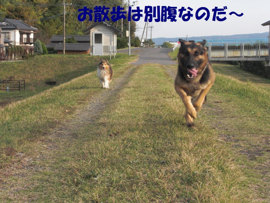 CIMG5946.jpg