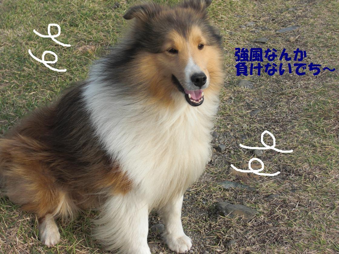 CIMG5954.jpg