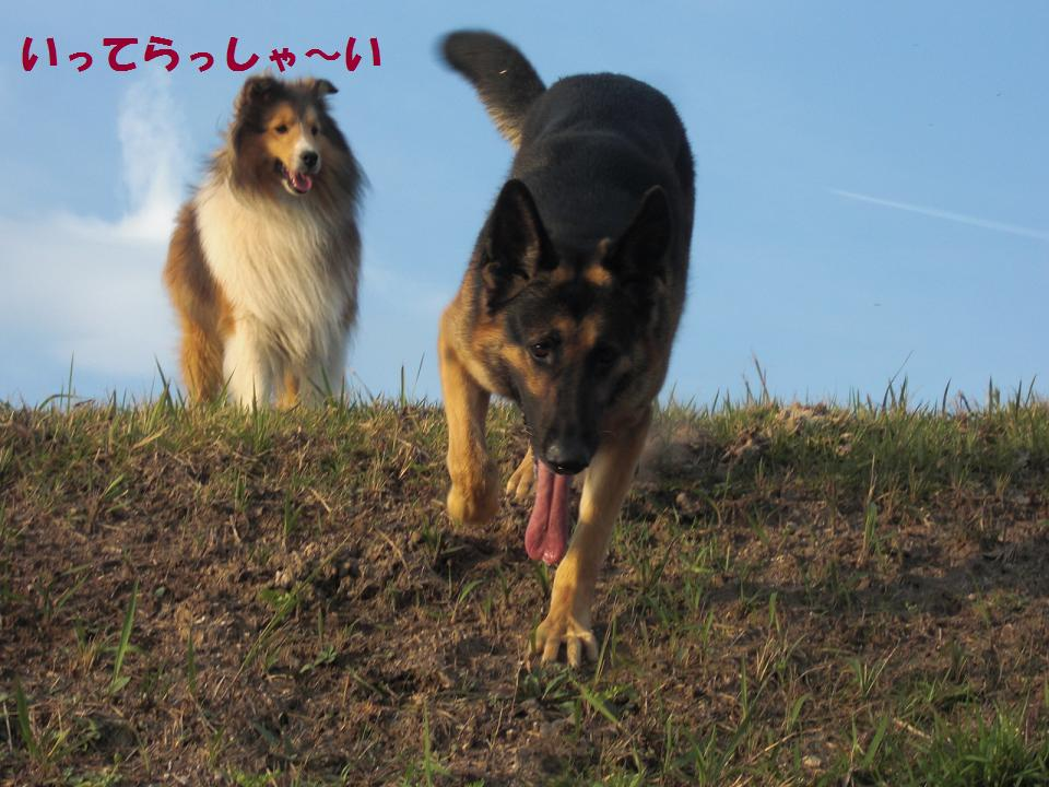 CIMG6057.jpg