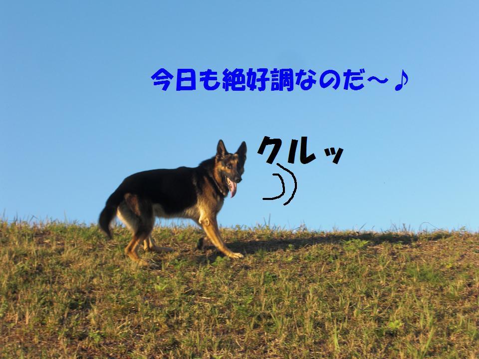 CIMG6781.jpg