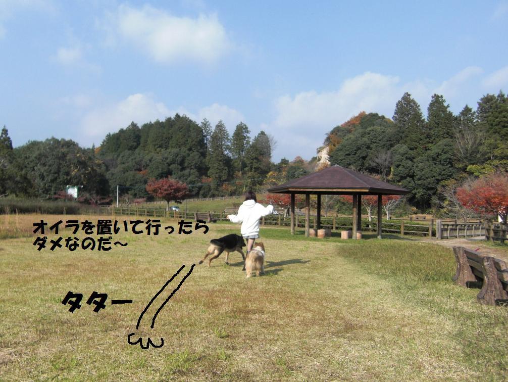 CIMG7074.jpg