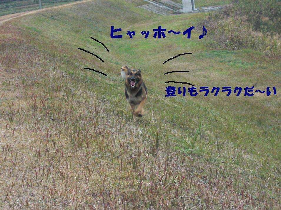 CIMG7751.jpg