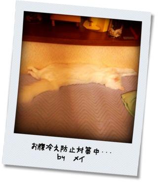photokako125479650735207.jpg