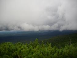 大森林地帯