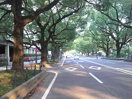 宮崎県庁前の楠並木通り