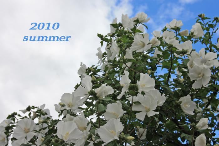 2010_0809 002a-80