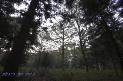 早秋の森 SIGMA EX10-20 1:4-5.6DC HSM