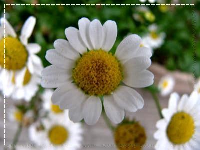 2011_05310029.jpg