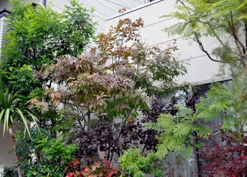 DSC_3086-20101113.jpg