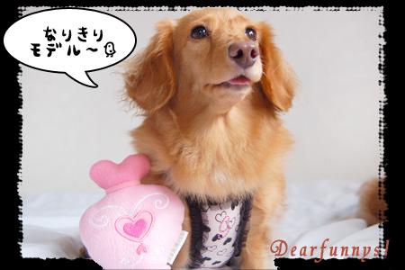 lovely-gift2-1_20090809.jpg