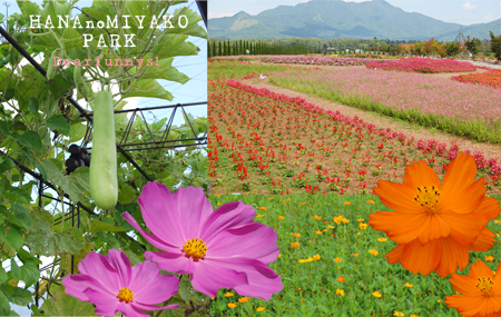 park5_20090829.jpg