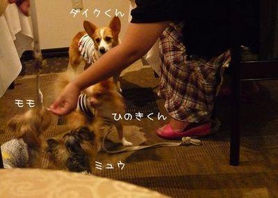 P1020894ブログ