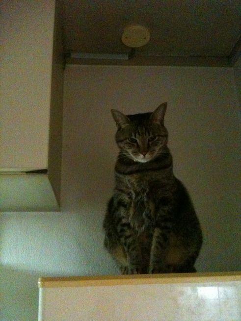 冷蔵庫の上のミー