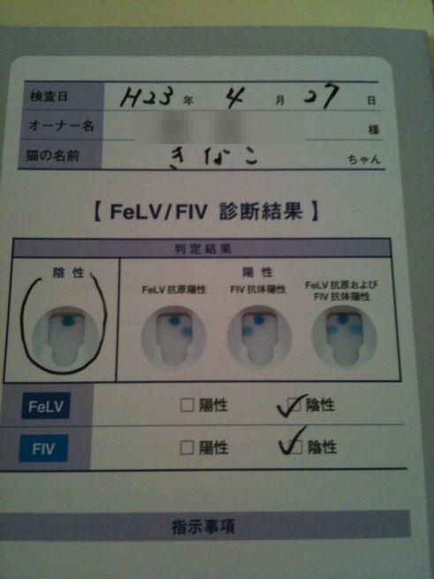 ネコエイズ・白血病検査