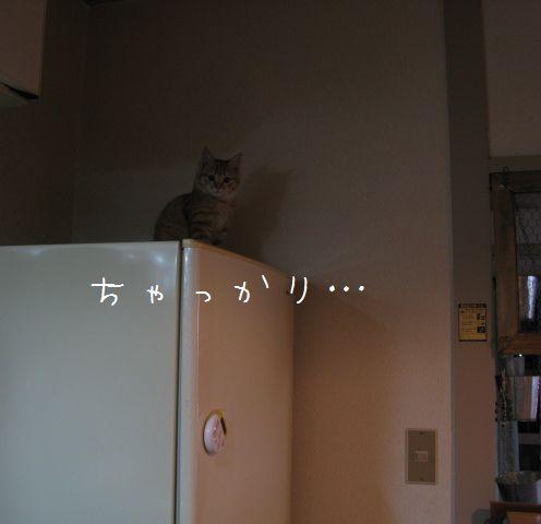 冷蔵庫の上のきなw