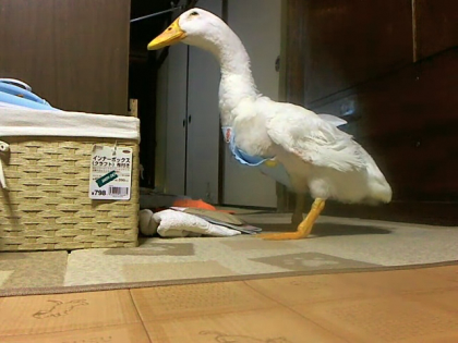 2011-0724-ga-chan1_convert_20110726132953.png