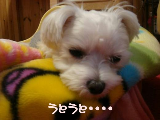 momo1_20091204092906.jpg