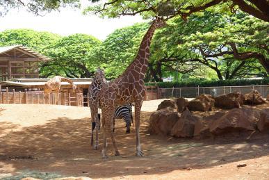 ホノルル動物園2