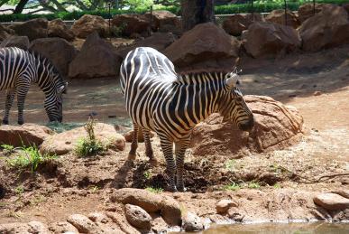 ホノルル動物園4
