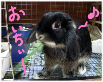 kimori21.jpg
