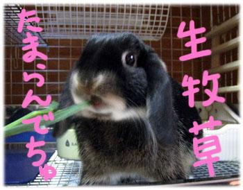 kimori24.jpg