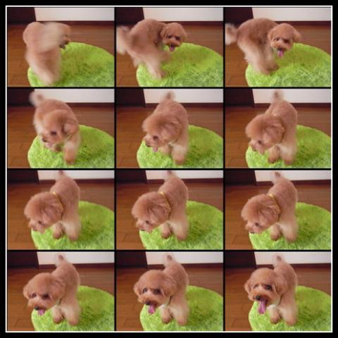 cats_20090805132138.jpg
