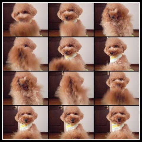 cats_20090805132220.jpg