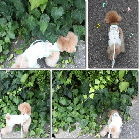 cats_20090912141145.jpg