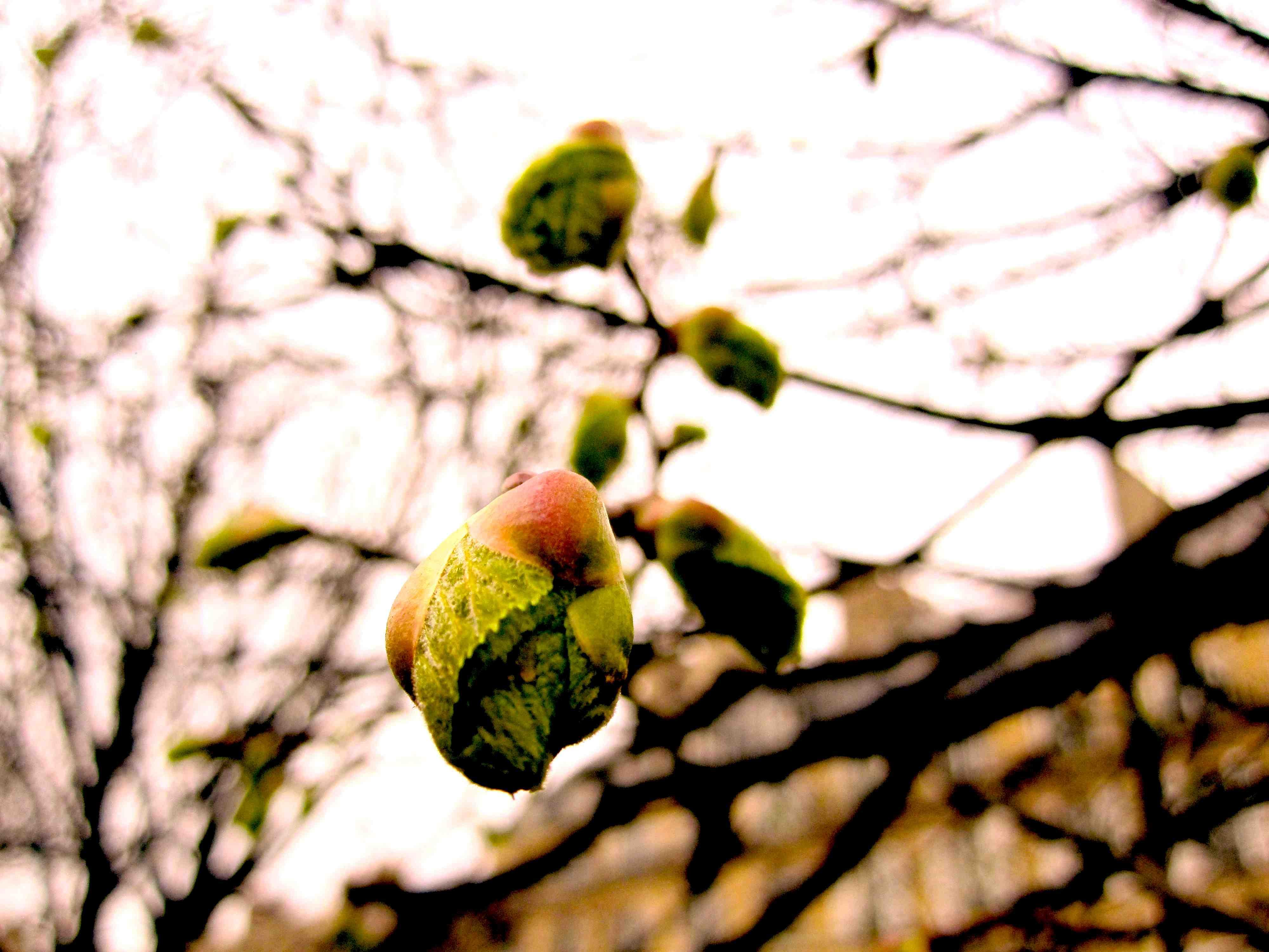 木の芽ブログ