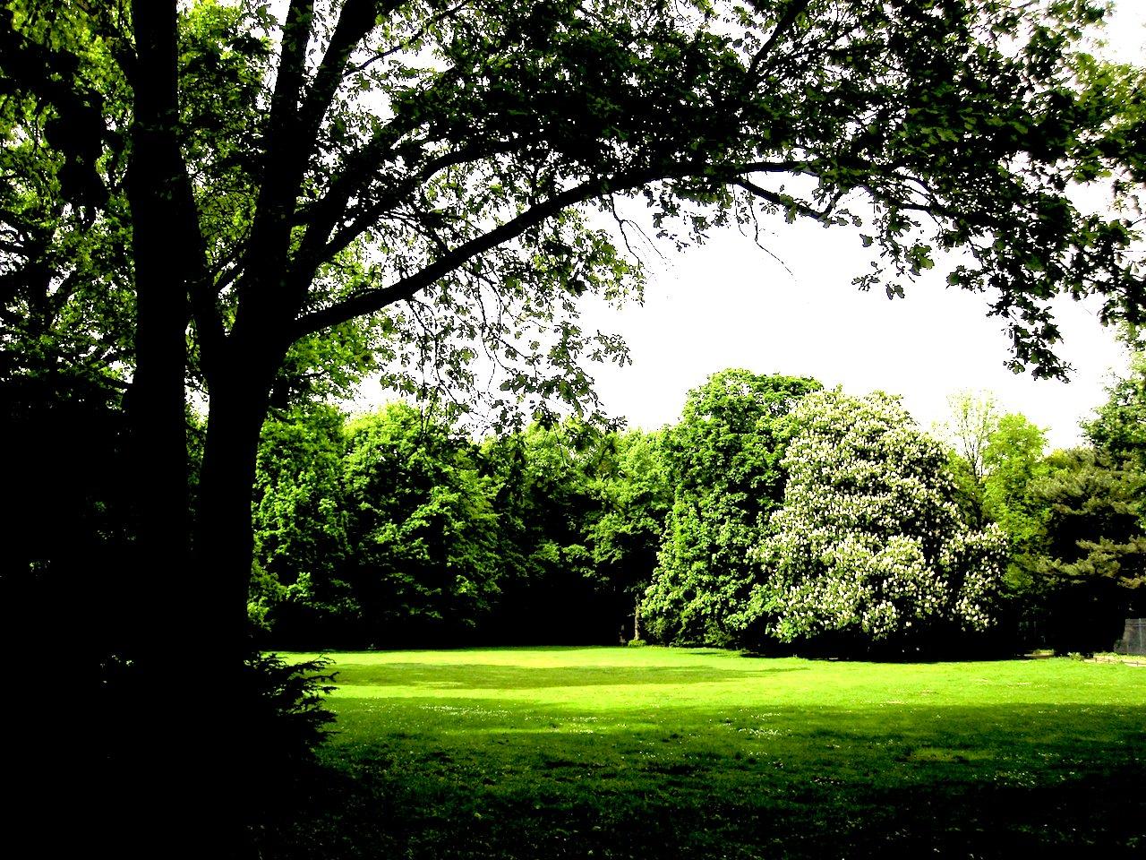 ベルリンの森ブログ