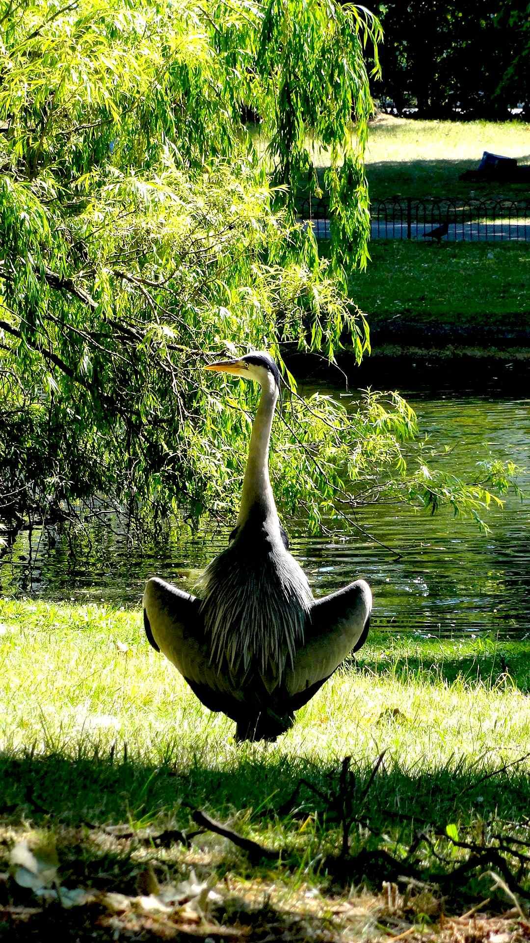 regend park2