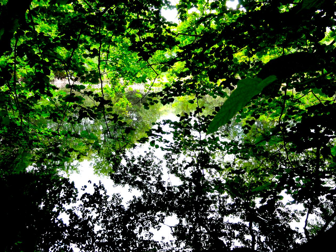 green leaves2