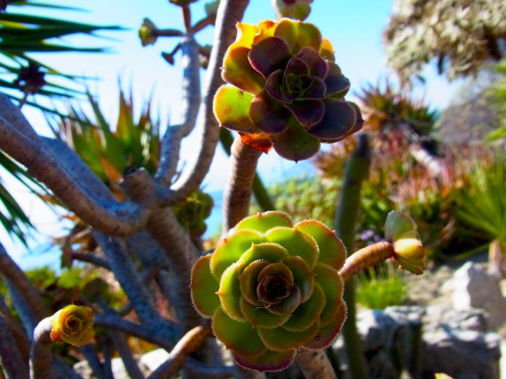 cactus25.jpg