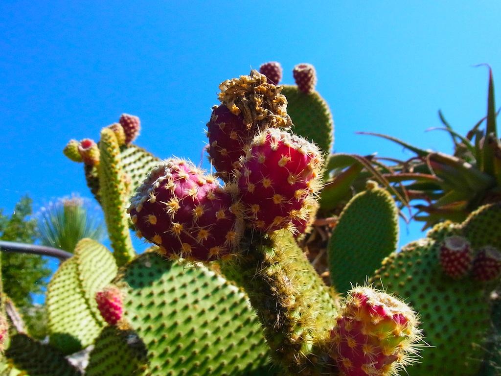 cactus27.jpg