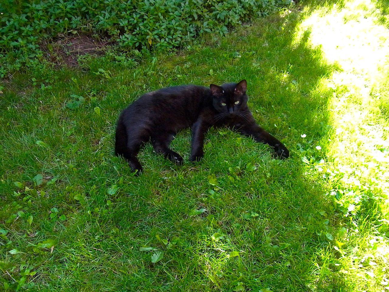 cat0823.jpg