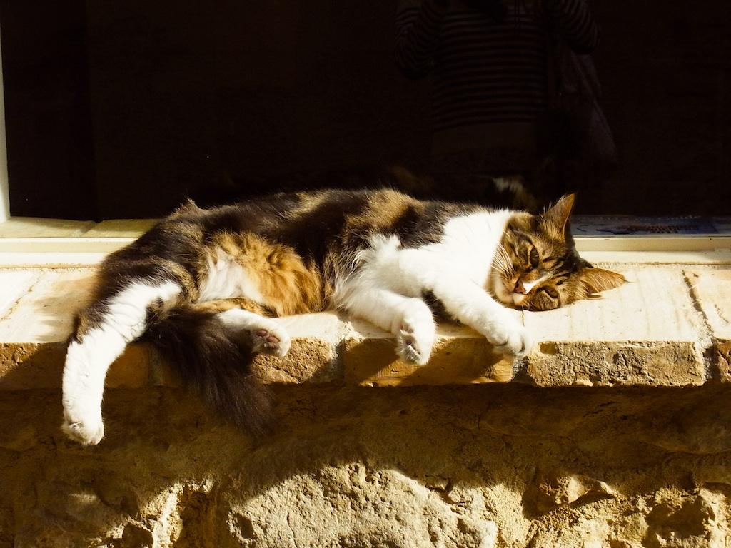 catsud4.jpg