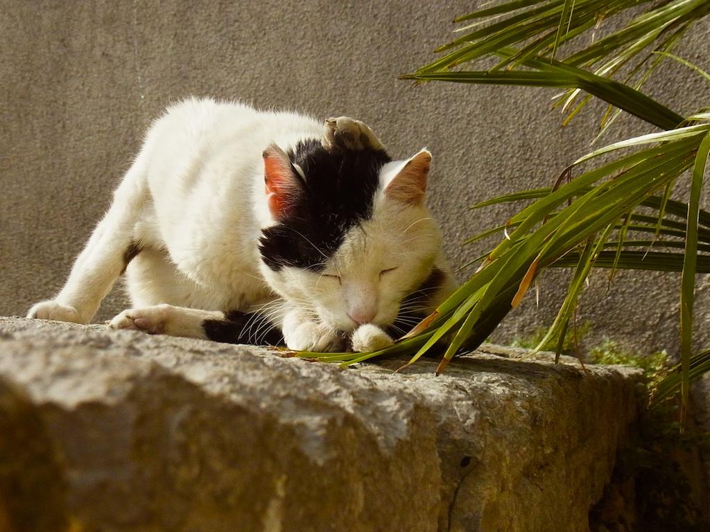 catsud7.jpg