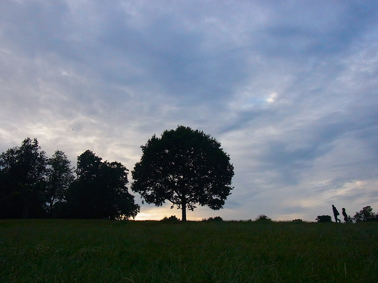 treeforest1.jpg