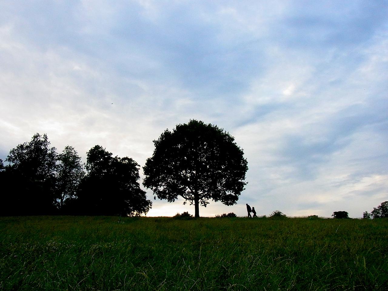 treeforest2.jpg