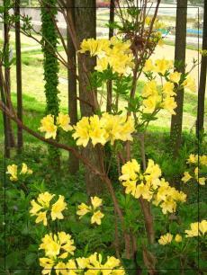 福智山ろく花公園6